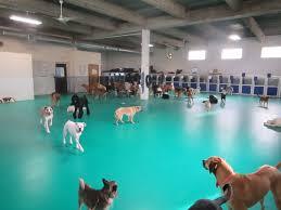 dog daycare flooring u2013 gurus floor