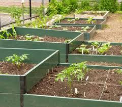 the nickel pincher the best veggie garden for tiny spaces