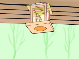 4 best ways to keep cats out of a garden wikihow
