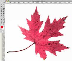 the color replacement tool in photoshop creative beacon