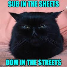nonplussed cat imgflip