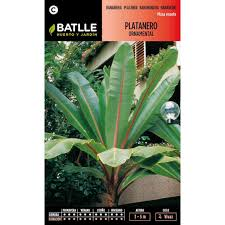 ornamental banana tree seeds for 1 33 on planeta huerto