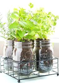 lights to grow herbs indoors best way to plant herbs indoors best herb garden indoor ideas on