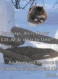 Flying Cat Meme - it s a complicated system lolcats lol cat memes funny cats