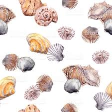 shell wallpaper seamless sea shell wallpaper on white background watercolor stock