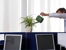 add plants to your office cubicle hgtv