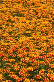 43 best summer plants images on pinterest plant catalogs non