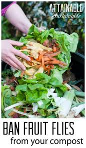 7 best images about composting for beginners on pinterest