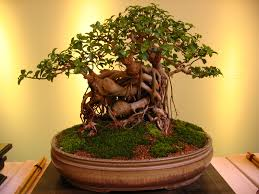 10 things to avoid when growing your bonsai tree