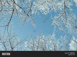 winter frosty tree tops winter image photo bigstock