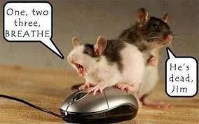 Dead Squirrel Meme - mouse cpr meme funny stuff pinterest meme funny memes and