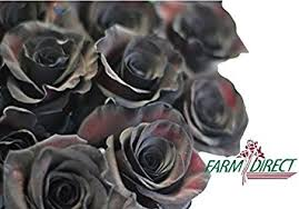 real black roses 100 real fresh black roses and amazing