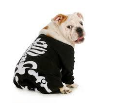 english bulldog halloween costumes for the halloween