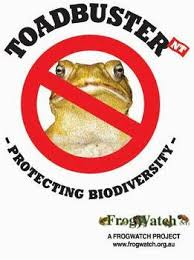 How To Get Rid Of Cane Toads In Backyard Toad Busters Biodiversity Nt