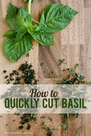 a simple kitchen tip how to quickly cut basil