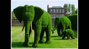 topiary trees topiary the of shaping trees shrubs into forms