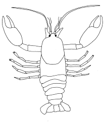 Crayfish Coloring Page crayfish colouring picture search science