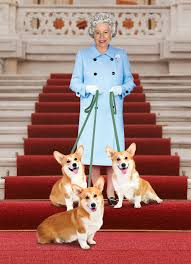 queen elizabeth dog queen elizabeth ll her corgis british royalty pinterest