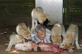 imagenes sorprendentes de lobos esfera azul amor y respeto entre animales racionales e irracionales