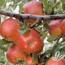 fruit trees u0026 plants edible garden the home depot