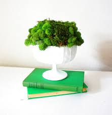 living moss in interior design 25 ideas and care tips home