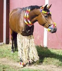 Halloween Costumes Horse 54 Mini Mules Images Costume Ideas Horse