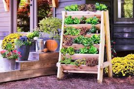 Best Plants For Vertical Garden - the 11 best vertical garden ideas