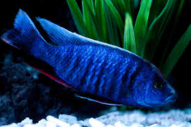Freshwater Fish How To Choose The Best Color Spectrum For Your Freshwater Fish