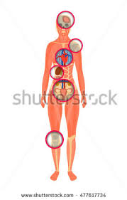 Photos Of Human Anatomy Female Anatomy Stock Images Royalty Free Images U0026 Vectors