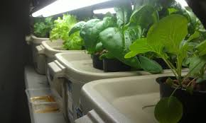 hydroponic vegetable gardening home outdoor decoration