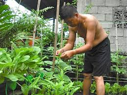 Container Gardening For Food - successful food production in recycled containers jimmy pioquinto
