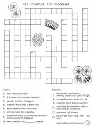 cells worksheets u2013 fran u0027s freebies