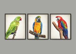 parrot watercolor wall art print set of 3 scarlet macaw