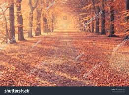red colorful autumn colors forest road stock photo 288608159