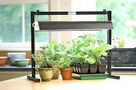 indoor plants singapore plant ls indoor plants led grow light for houseplants lights