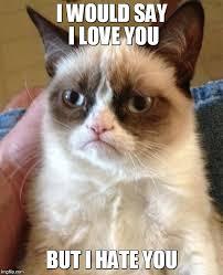 But I Love You Meme - grumpy cat meme imgflip