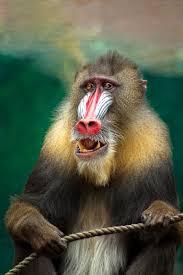 free stock photos of monkey sitting pexels