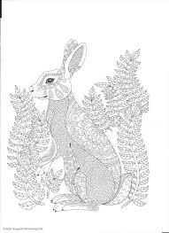 196 coloring rabbit images rabbits colouring