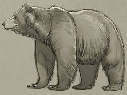 learn how to draw a bear from a pro u2013 boys u0027 life magazine