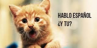 Funny Memes Spanish - you can haz spanish k international