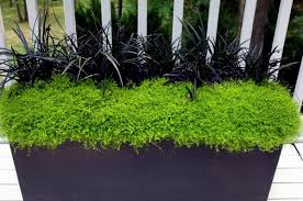 garden plants for shaded areas 13 home decoration