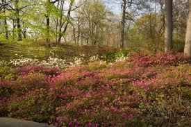 New York Botanical Garden Directions Azalea Garden Archives Plant Talk