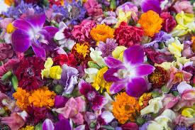 edible flowers for sale edible flowers spruce up springtime menus in las vegas las vegas