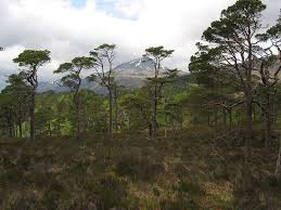 trees for life rewilding scotland forests seeds of good