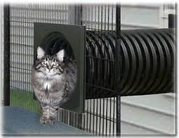 Keep Cats In Backyard Best 25 Outside Cat Enclosure Ideas On Pinterest Cat Enclosure