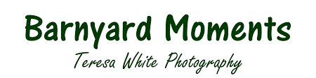 animal photography greeting cards for sale in nj barnyard moments