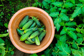 the easiest 10 vegetables to grow