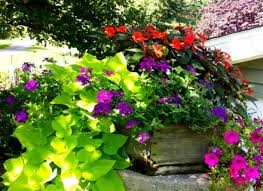 great flowers for containers ideas emerson design easy dunneiv