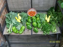 container gardening cheryl u0027s garden goodies