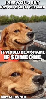 Orange Dog Meme - this is not funny when it happens to you whether or not you just